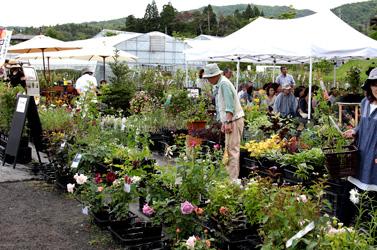 Plants-market02